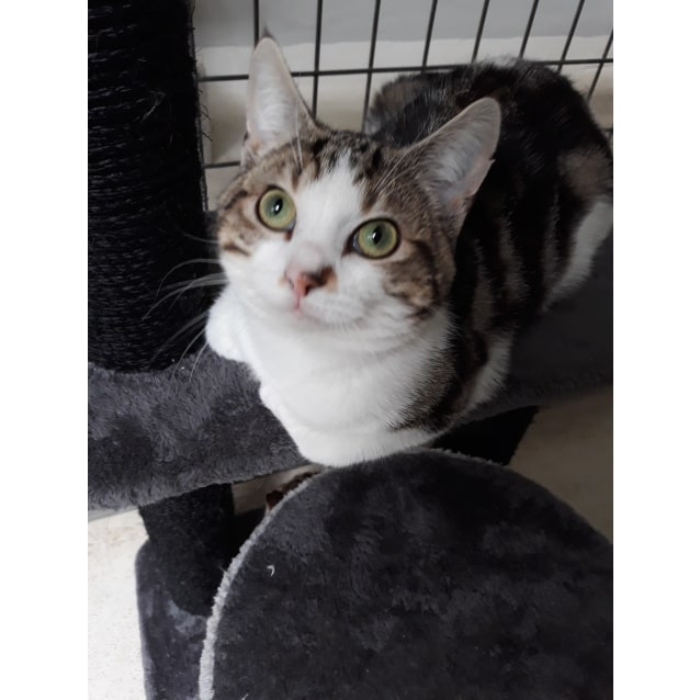 Photo of Bobby   Cat