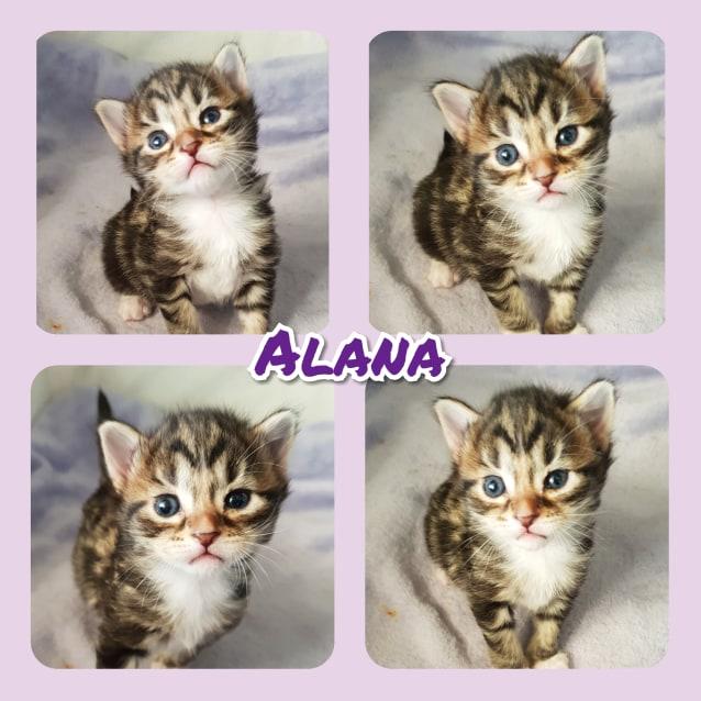 Photo of Alana