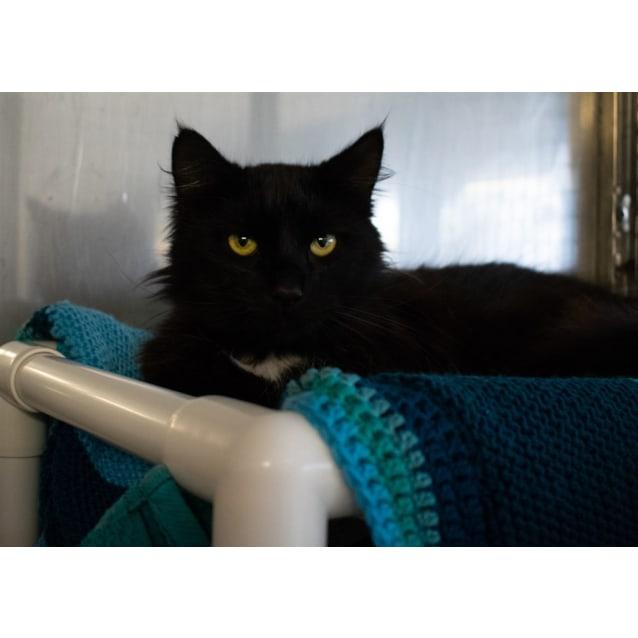 Photo of Blackie