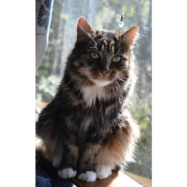 Photo of Elaina (Located In Belgrave)