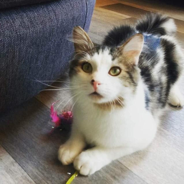 Photo of Duke   Meet Me At Cat Lounge  Neko Hq Preston