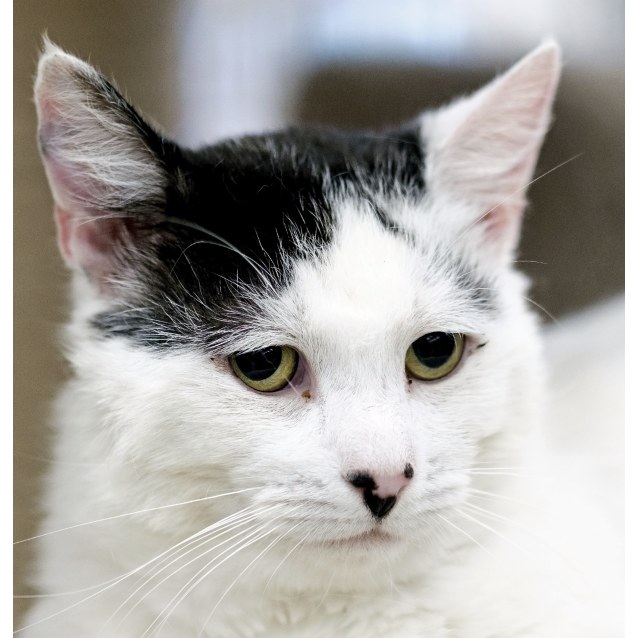 Photo of Patches ** On Trial With My New Family **