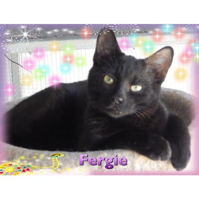 Photo of Fergy