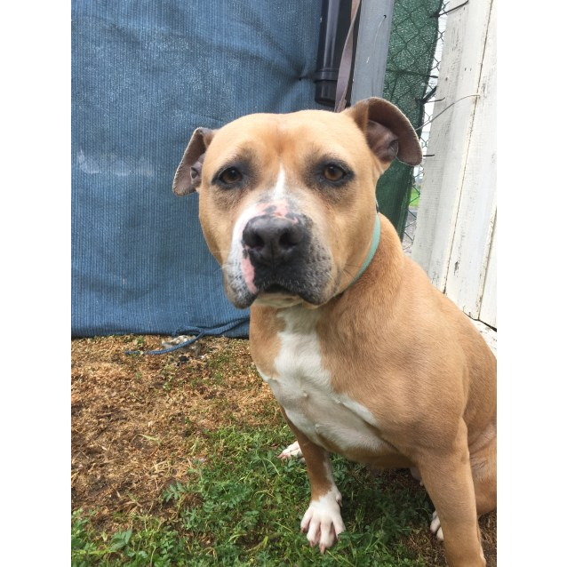 Photo of Lucy   43631