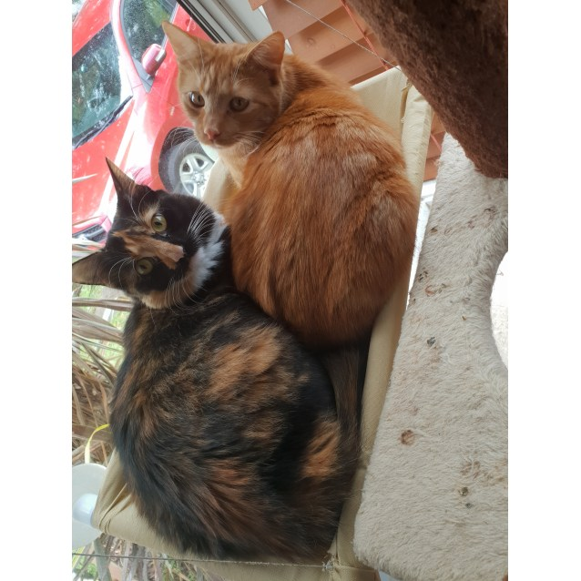 Photo of Tiger And Jaffa