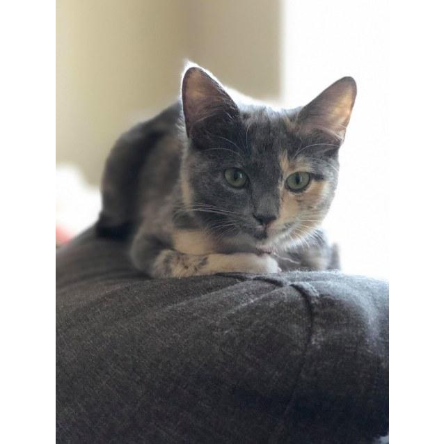 Photo of Syrah