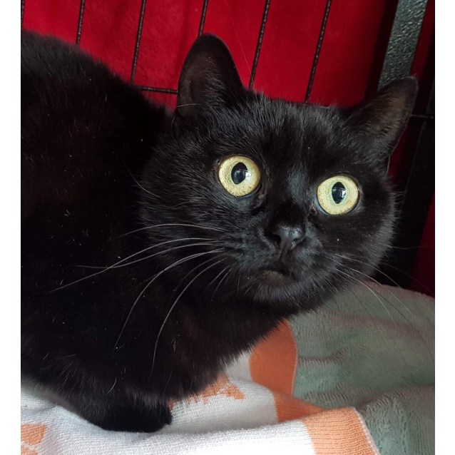 Photo of Stacey   Meet Me At Cat Lounge/Neko Hq Preston