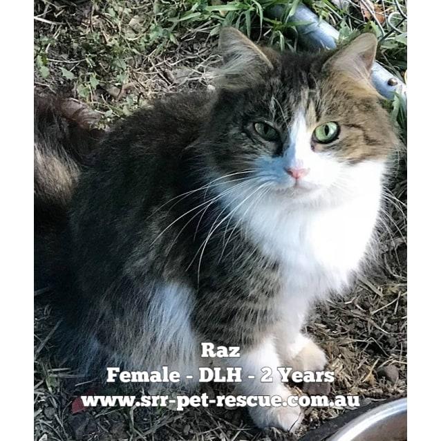 Photo of Raz
