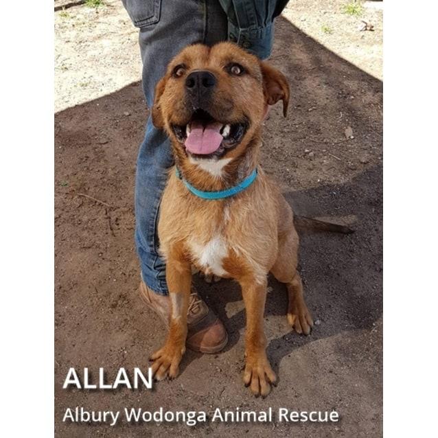 Photo of Allan