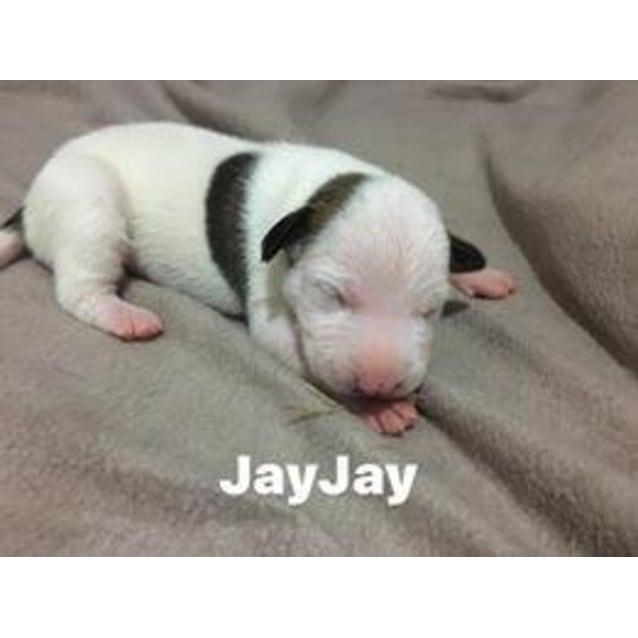 Photo of Jayjay