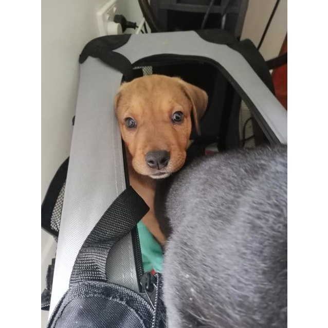 Photo of Turi *Adoption Pending*
