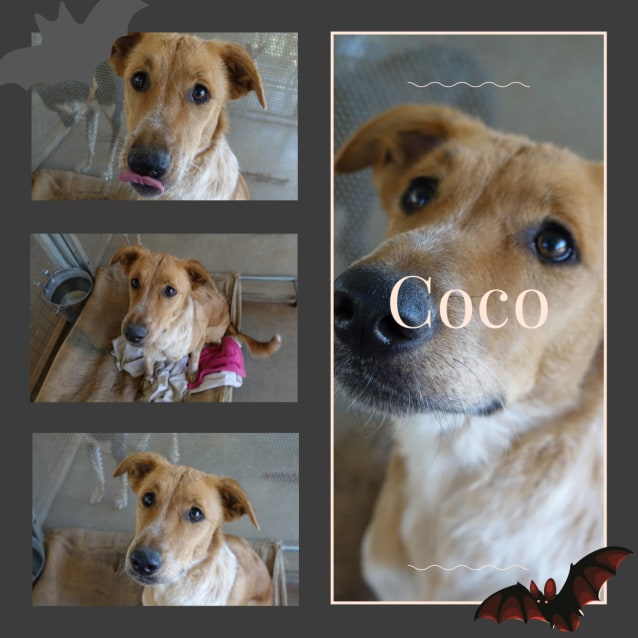 Photo of Coco  Dg18 411