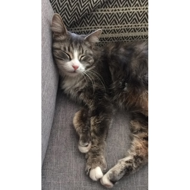 Photo of Minty (Located In Clayton)