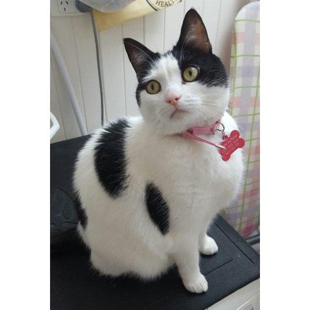 Photo of Princess Puss Puss Brackenwood