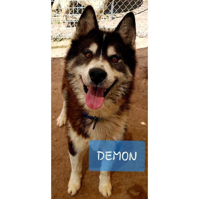 Photo of ❤🐾Demon🐾❤