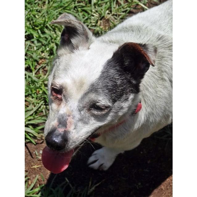 Photo of Roxy, Jetta