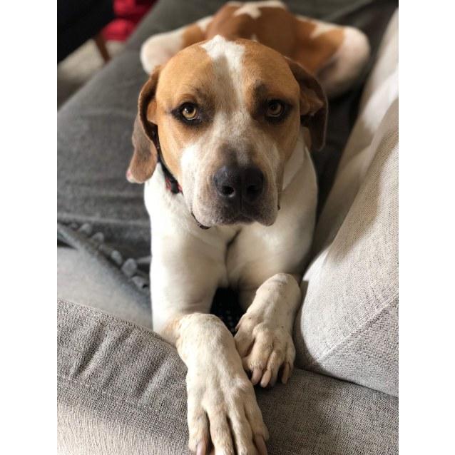 Photo of Murphy