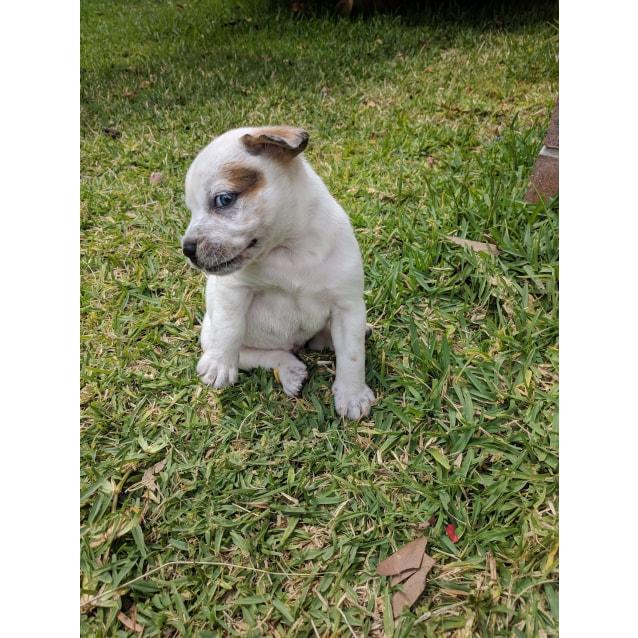Photo of Pooh Bear *Adoption Pending*