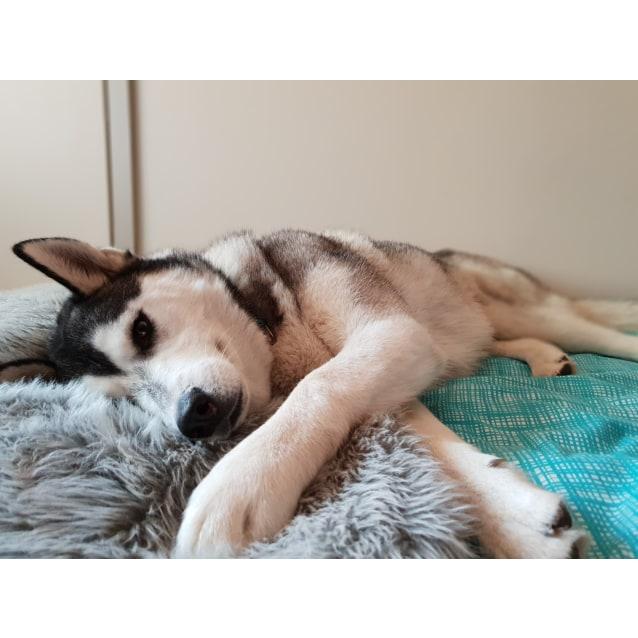 Photo of Maki