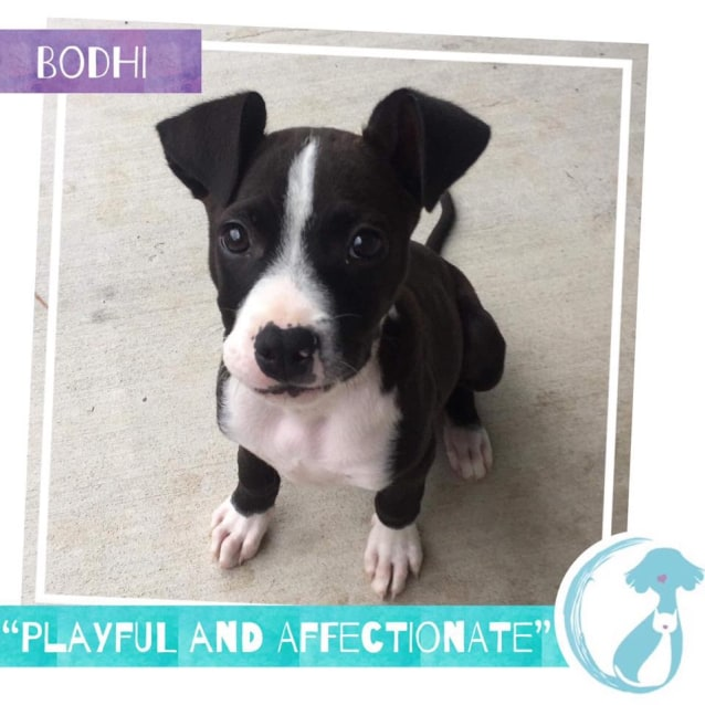 Photo of Bodhi