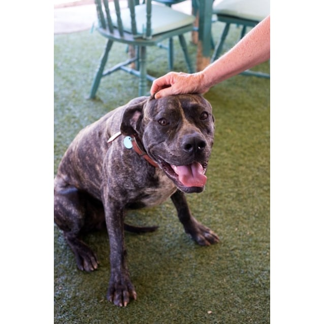 Photo of Rambo D3991   Adoption Pending