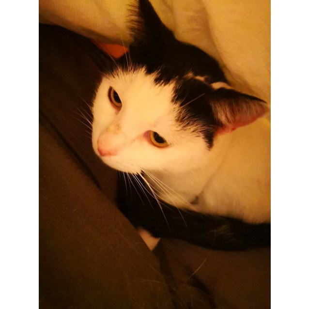 Photo of Sylvie  The Snuggly Sweetheart.