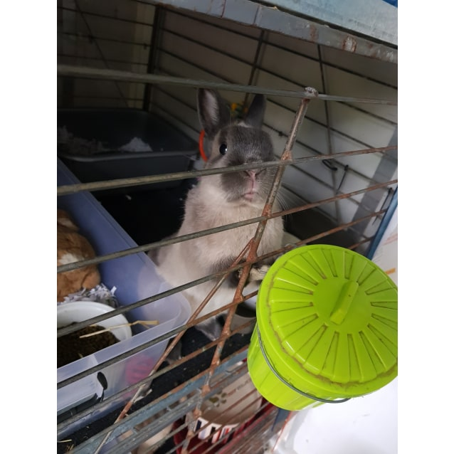Photo of Hoppity