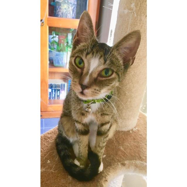 Photo of Pixie