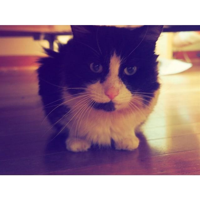 Photo of Osin