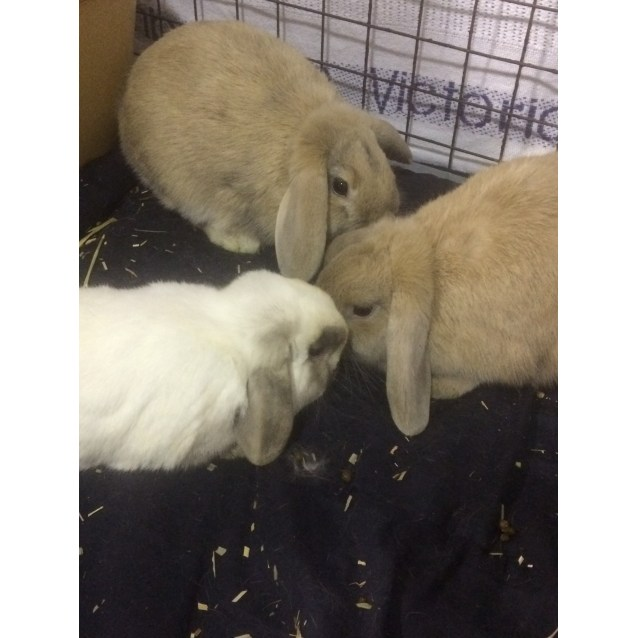 Photo of Ollie, Fallow And Roe