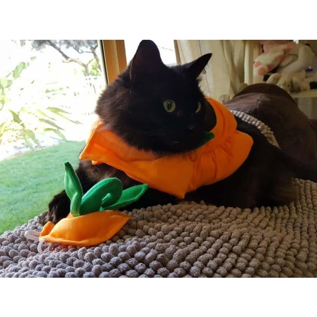 Photo of Loki