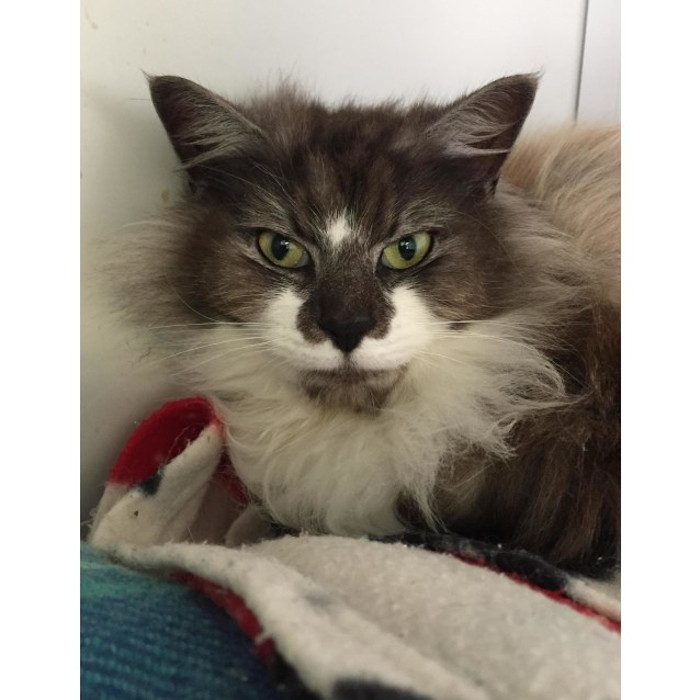 Photo of Flossie Id44008