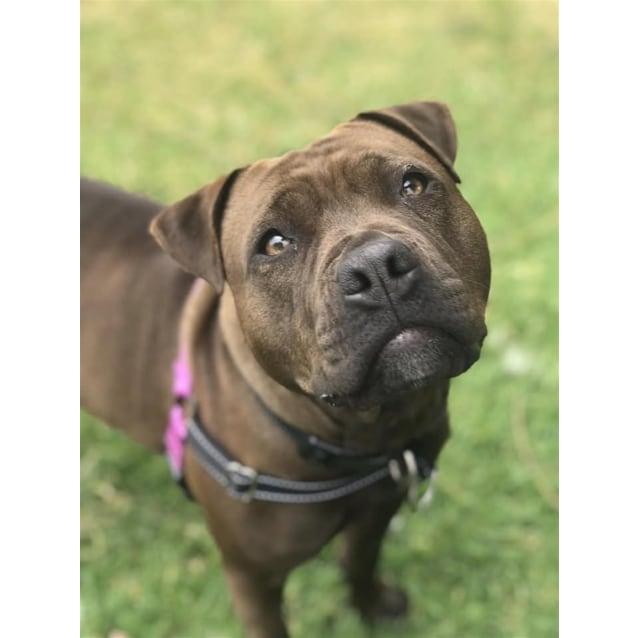 Photo of Peppa
