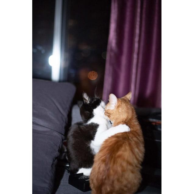 Photo of Frankie & Bandit