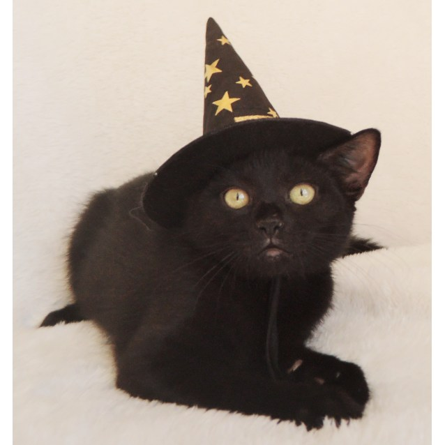 Photo of Wicca