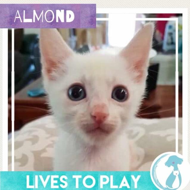 Photo of Almond