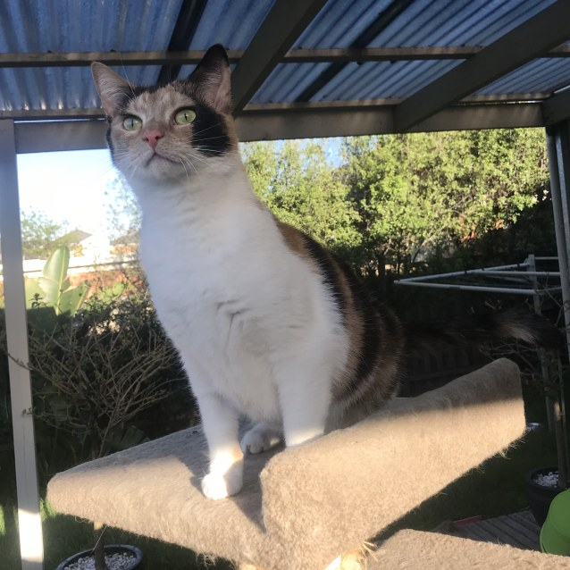 Photo of Gin Gin (Located In Bentleigh East)