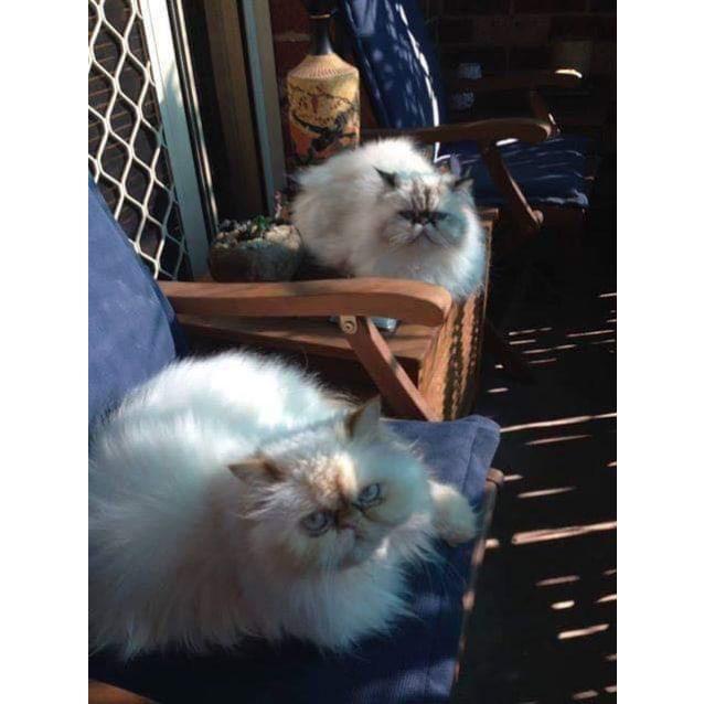 Photo of Cosmo & Bella