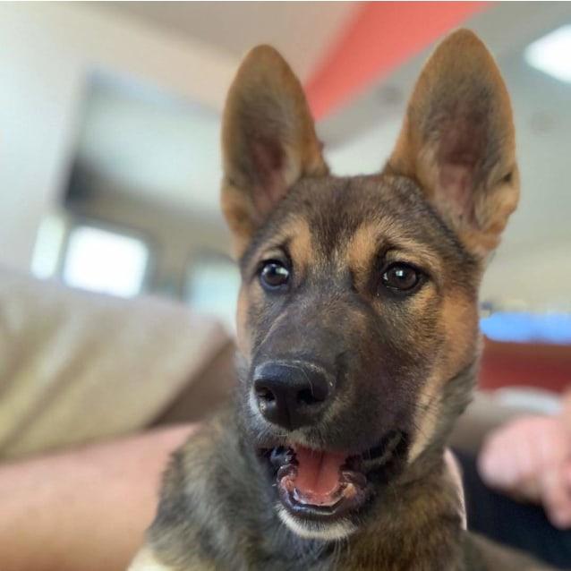 Photo of Trickett Dingo