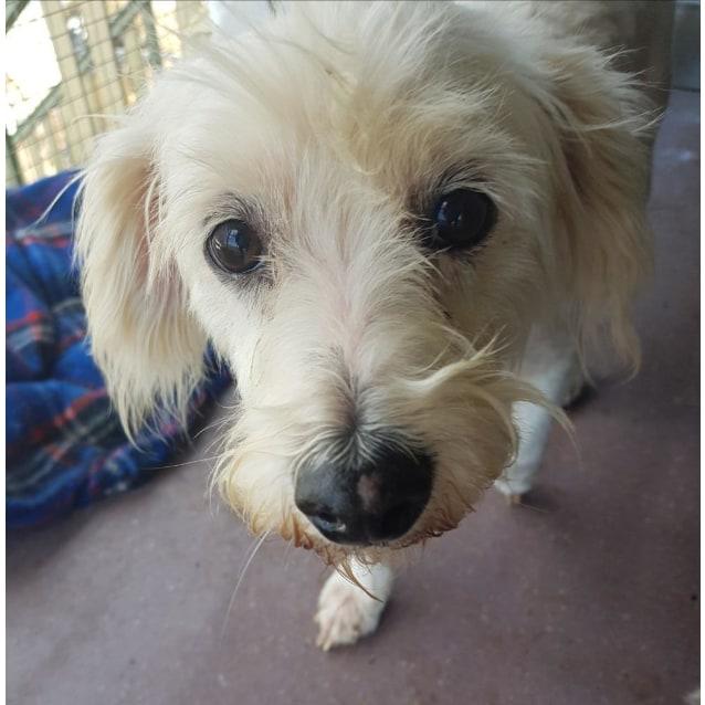 Photo of Benson (Adoption Pending)