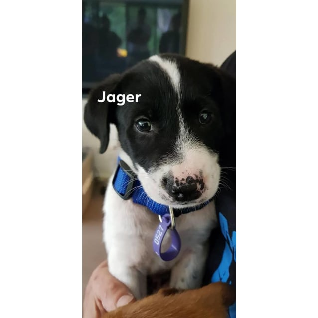 Photo of Jager