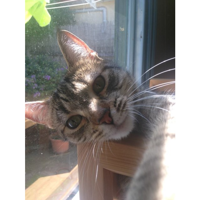 Photo of Kay (Located In Yarraville)