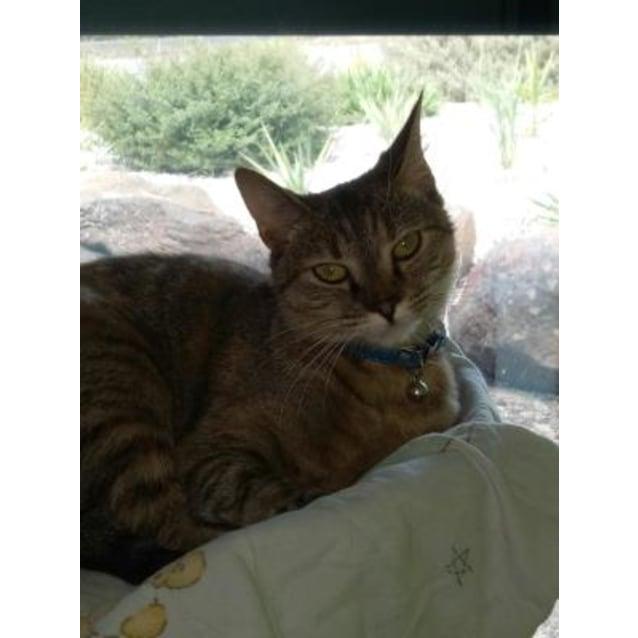 Photo of Betty Lou 895909