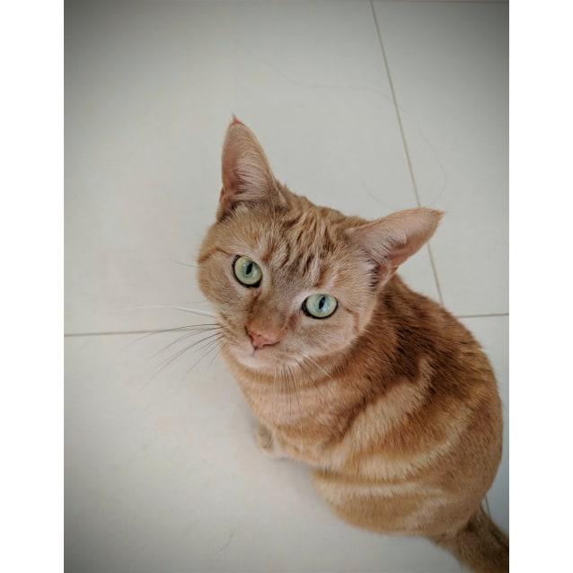 Photo of Mikan