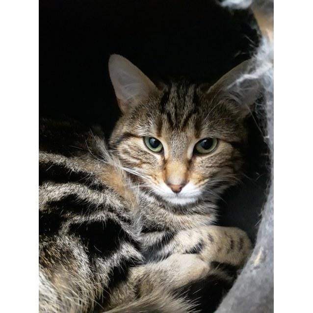 Photo of Alfie
