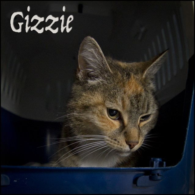 Photo of Gizzie