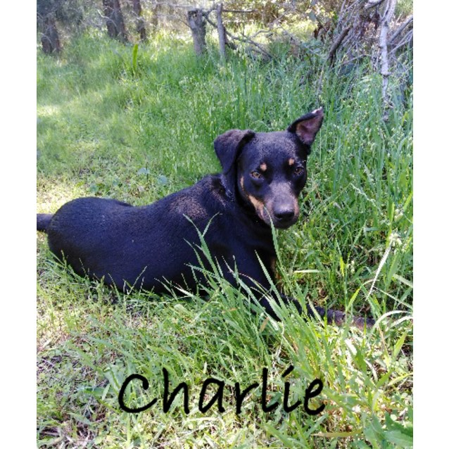 Photo of Charlie Boy