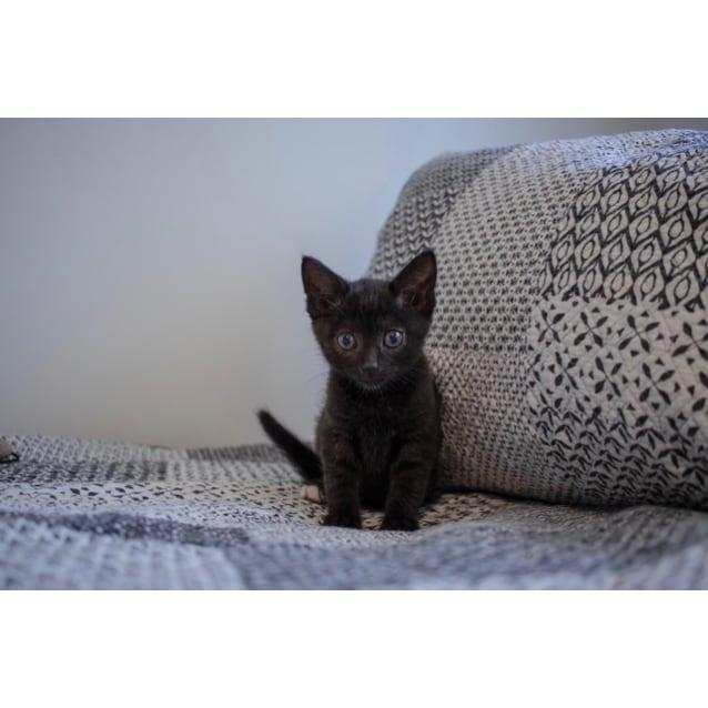 Photo of Sprout C3356