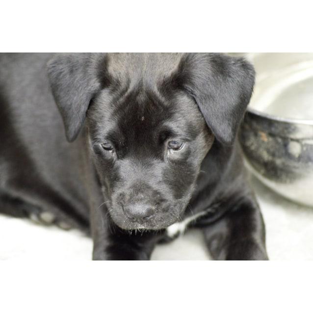 Photo of Erin (Adoption Pending)