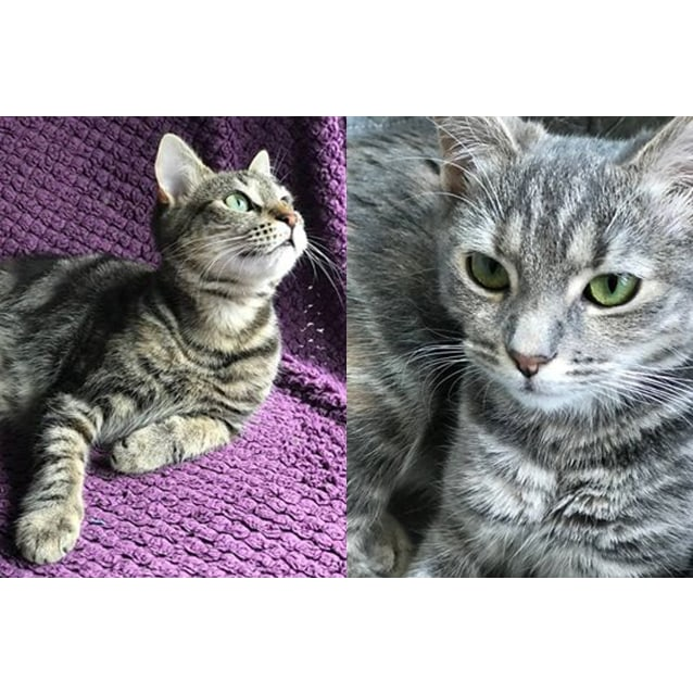 Photo of Tigress And Smokey